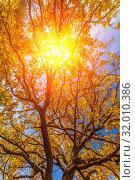 Купить «The sun's rays make their way through the foliage of a tree on an autumn day.», фото № 32010386, снято 7 октября 2018 г. (c) Акиньшин Владимир / Фотобанк Лори