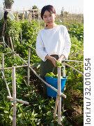 Купить «Girl harvesting ripe green peppers», фото № 32010554, снято 25 января 2020 г. (c) Яков Филимонов / Фотобанк Лори