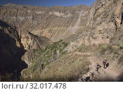 Trekking into the immense Colca Canyon, Cabanaconde, Peru. Стоковое фото, фотограф Dave Stamboulis / age Fotostock / Фотобанк Лори