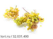 Купить «bunch of green grapes isolated on white», фото № 32031490, снято 16 августа 2019 г. (c) Peredniankina / Фотобанк Лори