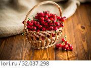 Купить «ripe red dogrose in a basket on a wooden», фото № 32037298, снято 17 августа 2019 г. (c) Peredniankina / Фотобанк Лори
