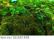 Купить «Beautiful green mossy bump with grass», фото № 32037418, снято 21 июля 2019 г. (c) Евгений Харитонов / Фотобанк Лори