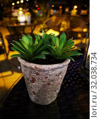 Cactus in a flower pot against the background of the city, bar. Стоковое фото, фотограф vlasova / Фотобанк Лори