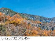 Autumn Forest landscape with snow on tree at Fujikawaguchiko Japan. Стоковое фото, фотограф Zoonar.com/Vichie81 / easy Fotostock / Фотобанк Лори