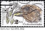 Red Crossbill, Loxia curvirostra, Spruce Branch, postage stamp, Czechoslovakia, 1983. (2014 год). Редакционное фото, фотограф Ivan Vdovin / age Fotostock / Фотобанк Лори