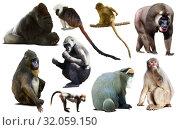 Купить «collection of different monkeys», фото № 32059150, снято 17 сентября 2019 г. (c) Яков Филимонов / Фотобанк Лори