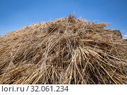 A pile of barley, Debre Berhan, Ethiopia. Стоковое фото, фотограф Edwin Remsberg / age Fotostock / Фотобанк Лори
