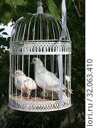 Пара белых  голубей в клетке. Стоковое фото, фотограф Татьяна Пухова / Фотобанк Лори