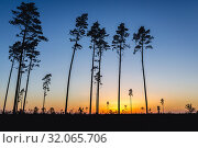 Sunset over destroyaed forest in Rytel village, after severe storms that passed in August 2017 over Poland and killed 5 people. Стоковое фото, фотограф Konrad Zelazowski / easy Fotostock / Фотобанк Лори