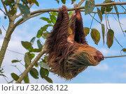 A sloth in the Cahuita National Park Costa Rica. Стоковое фото, фотограф Zoonar.com/Matthieu Gallett / easy Fotostock / Фотобанк Лори