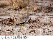 Nature, Wild, Tasha, Namibia, Bird. Стоковое фото, фотограф Lukas Schwab / age Fotostock / Фотобанк Лори