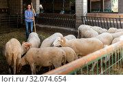 Купить «Female farmer cleaning sheep barn», фото № 32074654, снято 13 ноября 2019 г. (c) Яков Филимонов / Фотобанк Лори