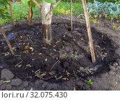Углубление почвы вокруг плодового дерева на приусадебном участке. Стоковое фото, фотограф Вячеслав Палес / Фотобанк Лори