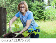 Купить «Mature woman gardening in her backyard, sets plants in steel barrel, Caucasian female in eyeglasses looking at camera», фото № 32075750, снято 20 июля 2019 г. (c) Кекяляйнен Андрей / Фотобанк Лори