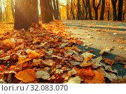 Купить «Осенний пейзаж. Осенние деревья в парке. Autumn landscape view of autumn park at sunset. Row of autumn trees with fallen dry leaves, focus at the autumn leaves», фото № 32083070, снято 18 октября 2018 г. (c) Зезелина Марина / Фотобанк Лори