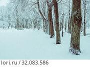 Купить «Зимний пейзаж. Зимний парк и заснеженные деревья. Winter landscape. Snowy trees along the winter park alley, winter snowy nature in cloudy day», фото № 32083586, снято 11 декабря 2017 г. (c) Зезелина Марина / Фотобанк Лори