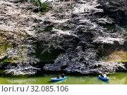 Japan, Honshu, Tokyo, Kudanshita, Chidori-ga-fuchi, Imperial Palace Moat , Cherry Blossom and Couples Boating. Стоковое фото, фотограф Steve Vidler / age Fotostock / Фотобанк Лори
