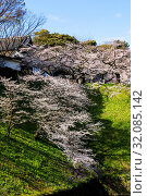 Japan, Honshu, Tokyo, Kudanshita, Chidori-ga-fuchi, Imperial Palace Moat, Cherry Blossom. Стоковое фото, фотограф Steve Vidler / age Fotostock / Фотобанк Лори