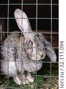 Купить «rabbit in a cage at shallow depth of field», фото № 32111094, снято 1 сентября 2019 г. (c) Дмитрий Бачтуб / Фотобанк Лори