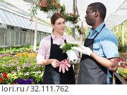 gardeners discussing flowers in orangery. Стоковое фото, фотограф Яков Филимонов / Фотобанк Лори