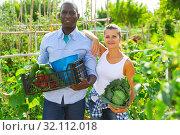 Купить «Happy couple with harvested vegetables in greenhouse», фото № 32112018, снято 14 августа 2019 г. (c) Яков Филимонов / Фотобанк Лори