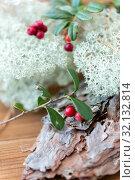 Купить «close up of cowberry and reindeer lichen moss», фото № 32132814, снято 13 сентября 2018 г. (c) Syda Productions / Фотобанк Лори