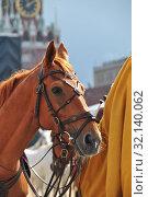 Купить «Лошадь крупным планом», эксклюзивное фото № 32140062, снято 2 сентября 2014 г. (c) lana1501 / Фотобанк Лори