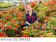 Купить «Female florist cultivating Begonia Semperflorens», фото № 32154622, снято 6 августа 2020 г. (c) Яков Филимонов / Фотобанк Лори