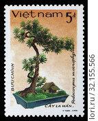 Купить «Podocarpus macrophyllus, yew plum pine, Buddhist pine, fern pine, bonsai tree, postage stamp, Vietnam, 1986.», фото № 32155566, снято 6 декабря 2010 г. (c) age Fotostock / Фотобанк Лори