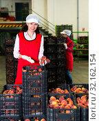 Купить «Women sorting and packaging peaches», фото № 32162154, снято 21 февраля 2020 г. (c) Яков Филимонов / Фотобанк Лори