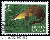 Купить «Nilgiri Marten, Martes gwatkinsi, Fauna of Sikhote-Alin Nature Reserve, postage stamp, Russia, USSR, 1970.», фото № 32167982, снято 5 января 2011 г. (c) age Fotostock / Фотобанк Лори