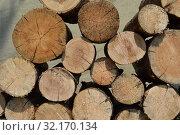 Купить «Поленница из распиленных круглых бревен, дрова на фоне брезента», фото № 32170134, снято 13 июля 2019 г. (c) александр афанасьев / Фотобанк Лори