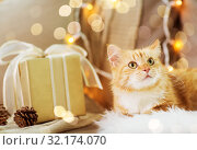Купить «red tabby cat on sofa with christmas gift at home», фото № 32174070, снято 15 ноября 2017 г. (c) Syda Productions / Фотобанк Лори