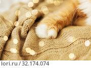 Купить «close up of red cat paw on knitted blanket», фото № 32174074, снято 15 ноября 2017 г. (c) Syda Productions / Фотобанк Лори