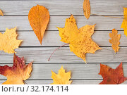 Купить «dry fallen autumn leaves on gray wooden boards», фото № 32174114, снято 25 октября 2018 г. (c) Syda Productions / Фотобанк Лори