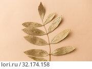 Купить «golden ash tree leaf on beige background», фото № 32174158, снято 20 ноября 2018 г. (c) Syda Productions / Фотобанк Лори