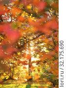 Купить «Defocused autumn background, tree, scarlet leaves of bushes and sun in the forest», фото № 32175690, снято 17 октября 2018 г. (c) Ольга Зиновская / Фотобанк Лори