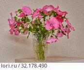 Autumn, multi-colored floral bouquet in a vase. Стоковое фото, фотограф Владимир Аликин / Фотобанк Лори