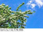 Купить «Blossoming apple tree against the blue sky», фото № 32178986, снято 11 мая 2019 г. (c) FotograFF / Фотобанк Лори