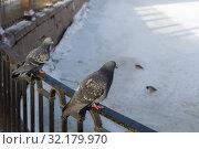 Купить «Two pigeons on the fence», фото № 32179970, снято 11 февраля 2015 г. (c) Argument / Фотобанк Лори