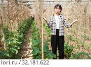 Confident female gardener checking plants while gardening in glasshouse. Стоковое фото, фотограф Яков Филимонов / Фотобанк Лори