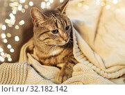 Купить «tabby cat lying on blanket at home in winter», фото № 32182142, снято 15 ноября 2017 г. (c) Syda Productions / Фотобанк Лори
