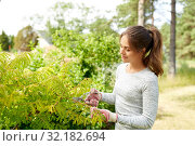 Купить «woman with pruner cutting bushes at summer garden», фото № 32182694, снято 12 июля 2019 г. (c) Syda Productions / Фотобанк Лори