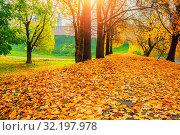 Купить «Осенний пейзаж. Осенние деревья в парке. Fall sunny colorful landscape. Fall park trees and fallen autumn leaves on the ground along the park alley», фото № 32197978, снято 18 октября 2018 г. (c) Зезелина Марина / Фотобанк Лори