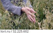 Купить «female hands gently grab ears of oats and release them, cloudy day, slow motion», видеоролик № 32225602, снято 13 августа 2019 г. (c) Ирина Мойсеева / Фотобанк Лори
