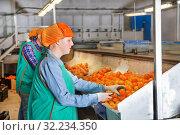 Купить «Female employee sorting mandarins on producing grading line», фото № 32234350, снято 15 декабря 2018 г. (c) Яков Филимонов / Фотобанк Лори