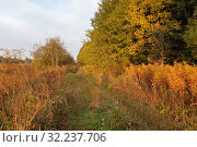 Autumn forest. The edge of the colorful autumn forest and the road. (2019 год). Редакционное фото, фотограф Моисеев Дмитрий / Фотобанк Лори