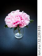 Pink Peony flower ,Paeonia suffruticosa, isolated on black. Стоковое фото, фотограф Peredniankina / Фотобанк Лори
