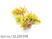 bunch of green grapes isolated on white. Стоковое фото, фотограф Peredniankina / Фотобанк Лори