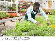 Купить «Salesman preparing for sale potted plants», фото № 32240226, снято 22 мая 2019 г. (c) Яков Филимонов / Фотобанк Лори